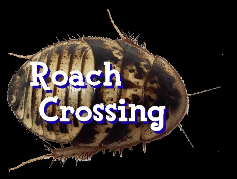 Roach Crossing